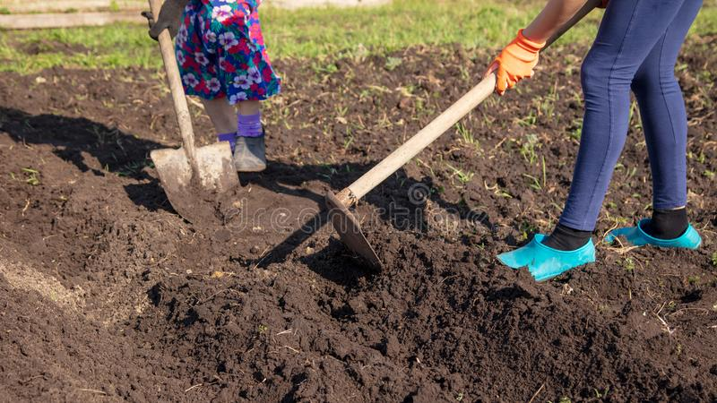 A girl with a grandmother is digging in the garden stock photo