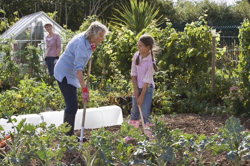 Girl (9-11) and grandmother digging in garden, smiling, mother standing beside greenhouse, watching stock photo