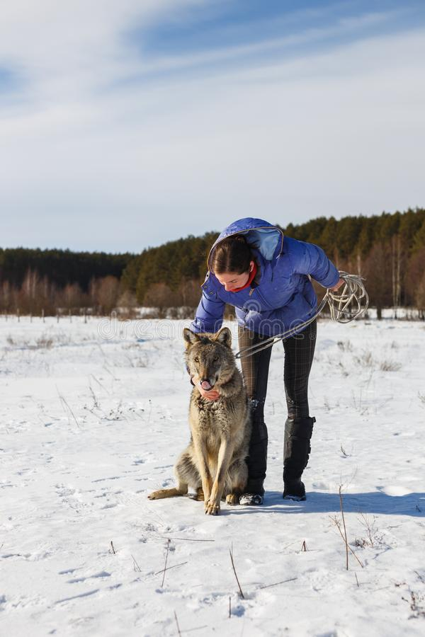 The girl and the gray wolf play together in a snowy and sunny field in winter royalty free stock photography