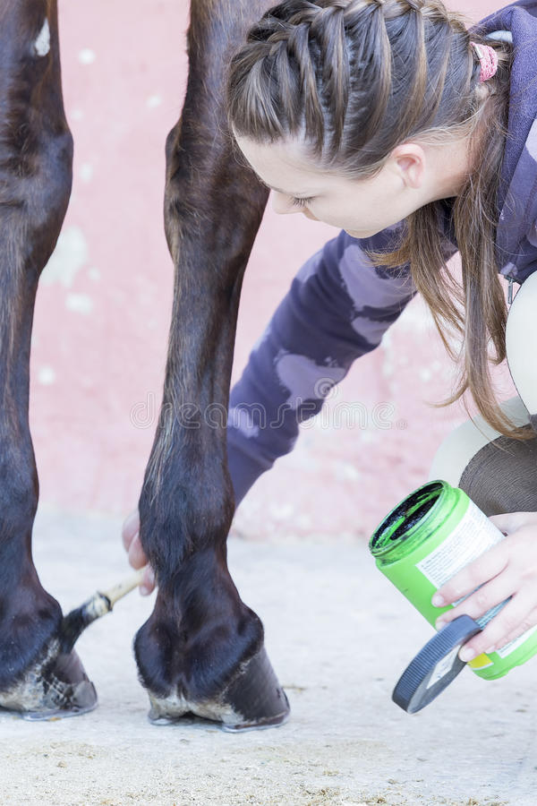 Girl grooming her horse. Young woman is painting the hooves of a purebred brown horse at the byre - focus on the face stock photo