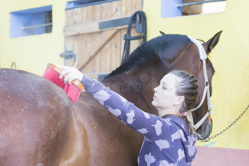 Girl grooming a horse. Young woman is brushing a purebred brown horse at the byre - focus on the face royalty free stock images