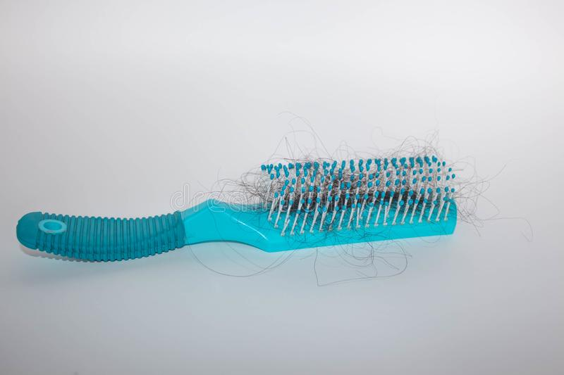 Girl Hairs fall with a comb and problem hair on white background. Hair fall or loss with blush is a problem of women. Girl Hairs fall with a comb and problem royalty free stock photo