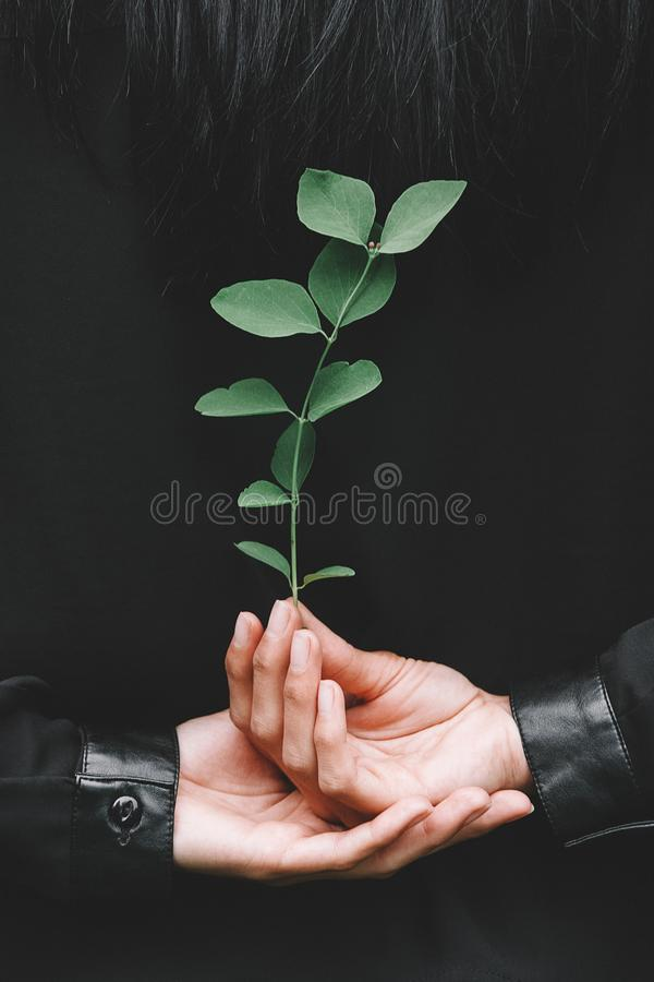 Girl hand holding clover leaf in garden royalty free stock photos