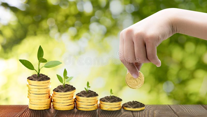 Girl hand holding a coin,Growing plants on coins stacked  Saving money concept preset.Investment Concept. royalty free stock photo