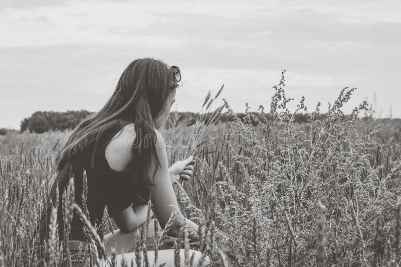 Girl harvest wheat spikelets on the field royalty free stock photography