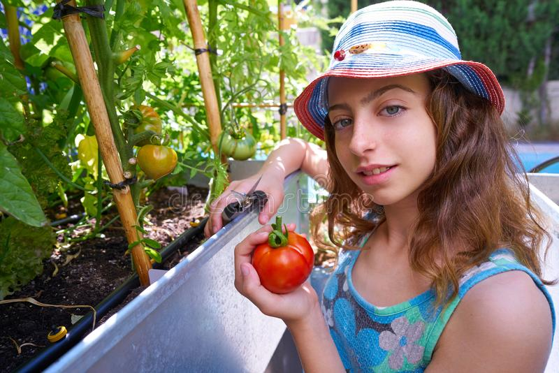 Girl harvesting tomatoes in a table orchard. Raised bed stock photography