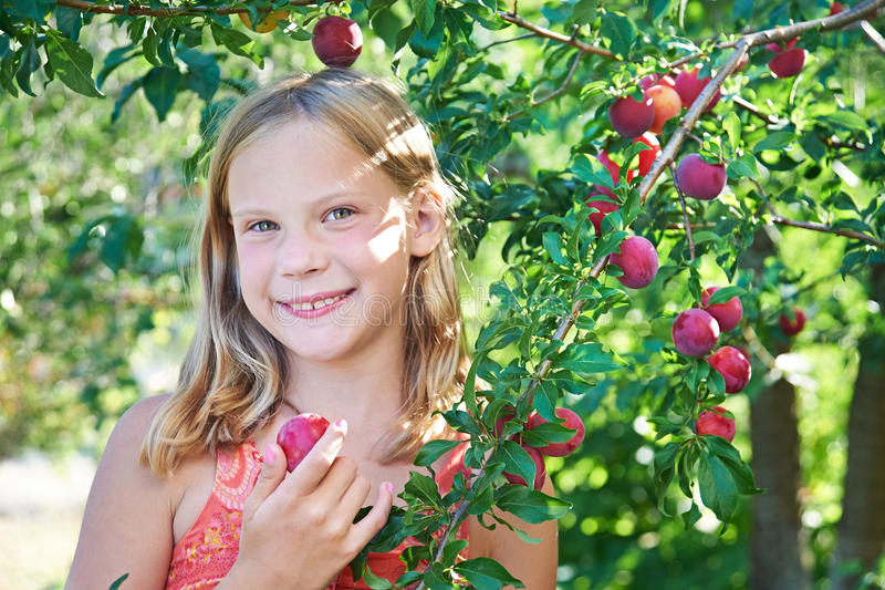 Girl harvests plums. In fruit garden royalty free stock images