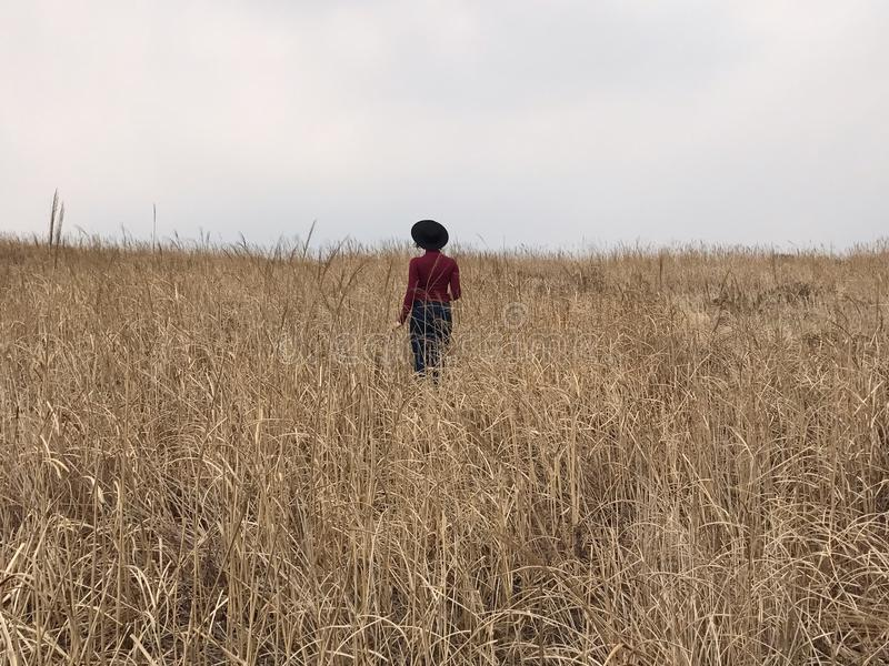 Girl with hat in the field stock photography