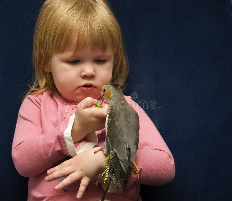 Girl And Her Cockatiel Stock Photography
