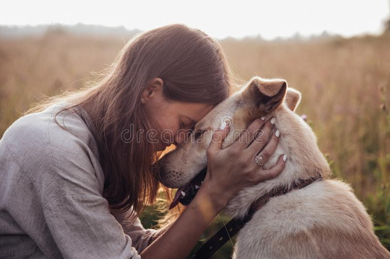 Girl and her friend dog on the straw field background. Beautiful young woman relaxed and carefree enjoying a summer stock photo