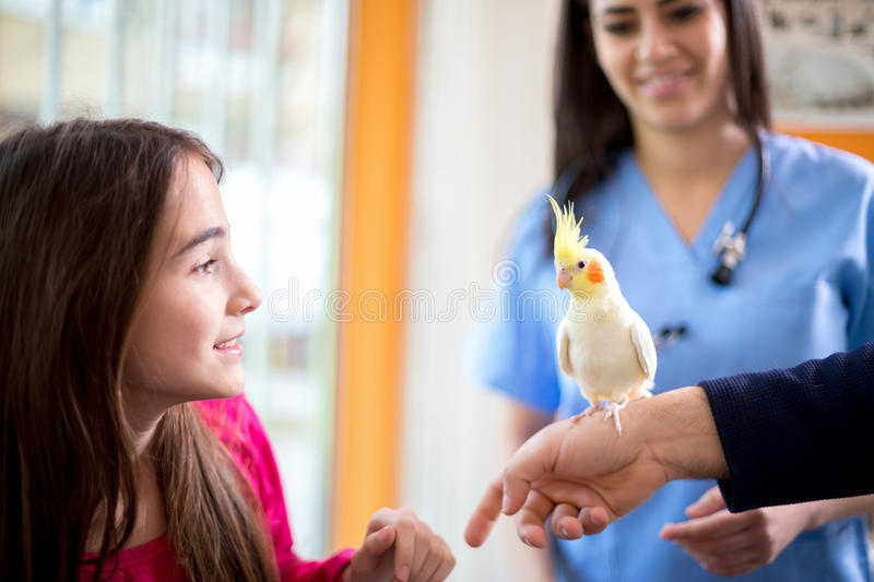 Girl with her nymph parrot in veterinary clinic stock images