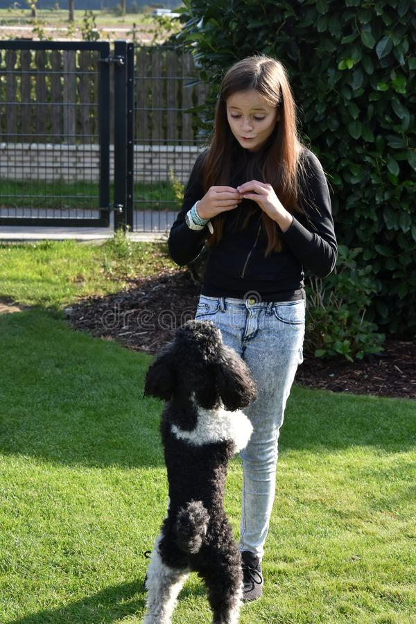 Girl and her poodle dog. Teenage girl plays with her little toy poodle dog in the garden stock photos