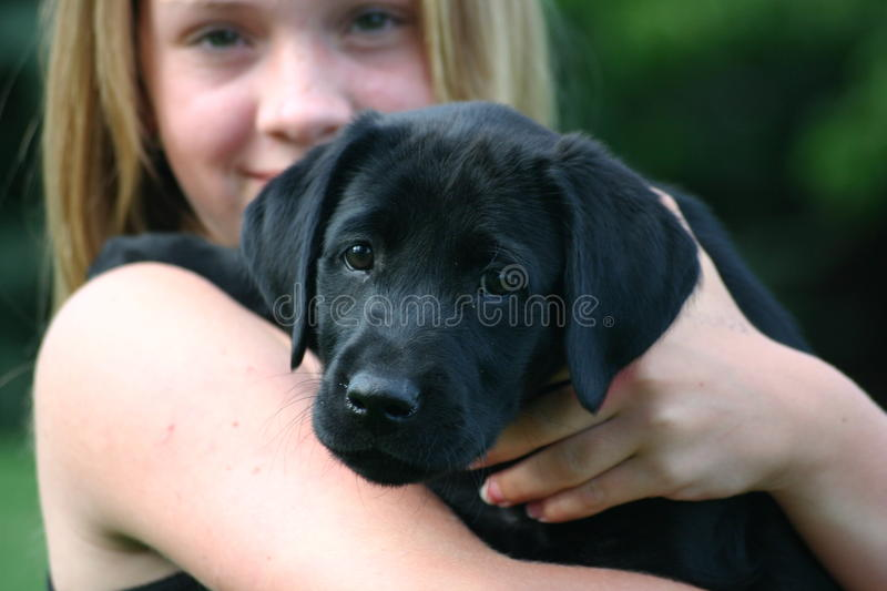 Girl Holding Black Labrador Puppy. Soft focus on girl and a head shot on the puppy royalty free stock photography