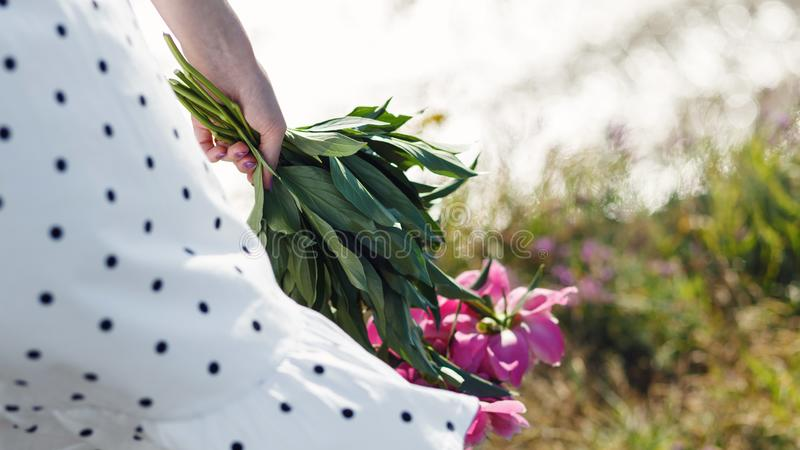 The girl is holding a bouquet of beautiful blooming pink peonies. Her white dress flutters in the wind. Beautiful summer view royalty free stock photos