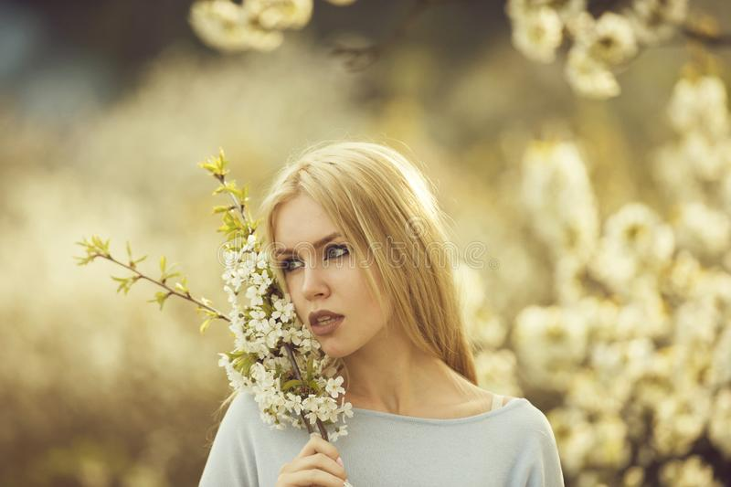 Girl holding branches of white, blossoming flowers. Girl or cute woman with blond, long hair holding branches of white, blossoming flowers in spring garden on royalty free stock image