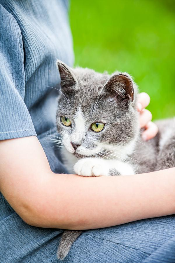 Girl Holding Cat royalty free stock photo