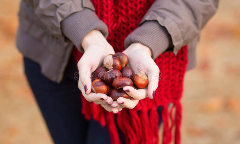 Girl holding chestnuts in her hands royalty free stock photos