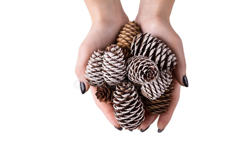 Girl holding a Christmas tree cone on white background stock photo