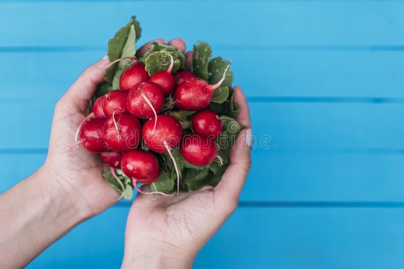 Girl holding radishes over the blue background royalty free stock photo
