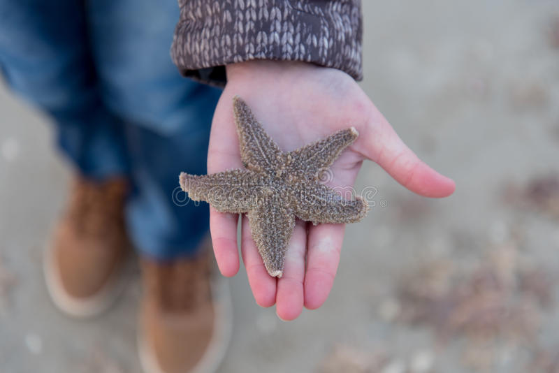 Girl holding dead starfish after storm. Girl holding dead starfish after a storm royalty free stock photos