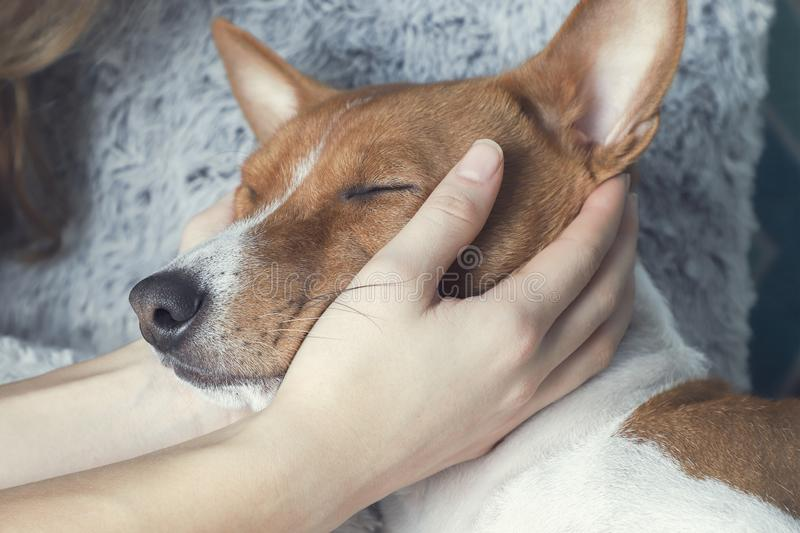 A girl holding a dog`s head stock images