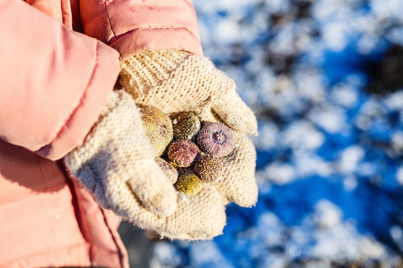 Girl holding frozen sea shells. Close up of a little girl holding frozen sea shells in her hands royalty free stock photos