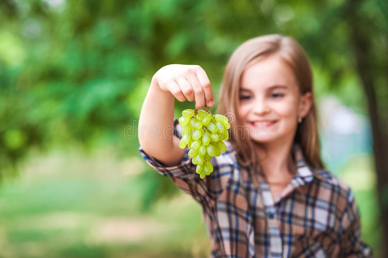 The girl is holding a grapes, a focus on green grapes. Beautiful little farmer girl eating organic grapes. The concept of harvest. royalty free stock images