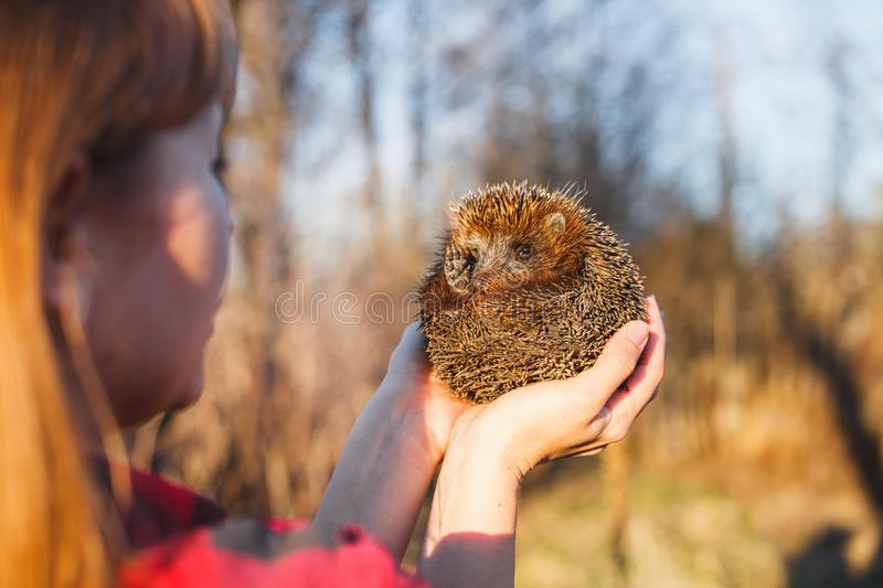 Girl holding a hedgehog on outstretched arms royalty free stock image