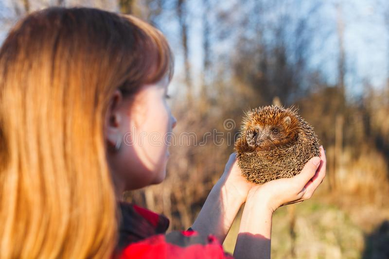 Girl holding a hedgehog on outstretched arms stock photography
