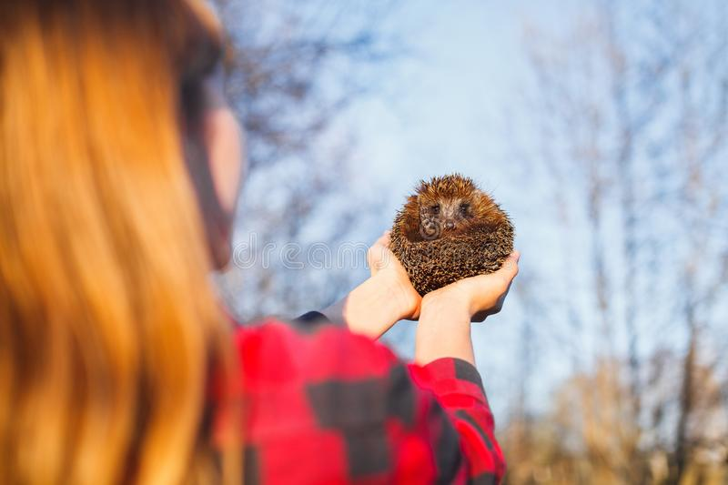 Girl holding a hedgehog on outstretched arms stock photo
