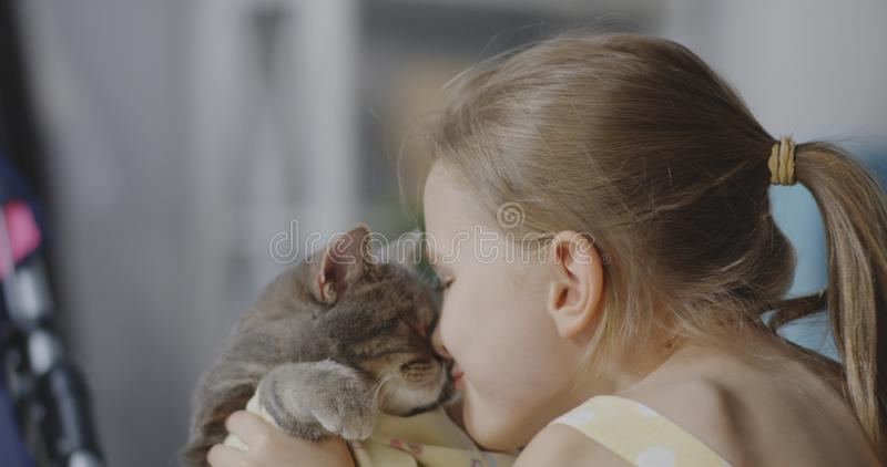 Girl holding and kissing cat royalty free stock photo