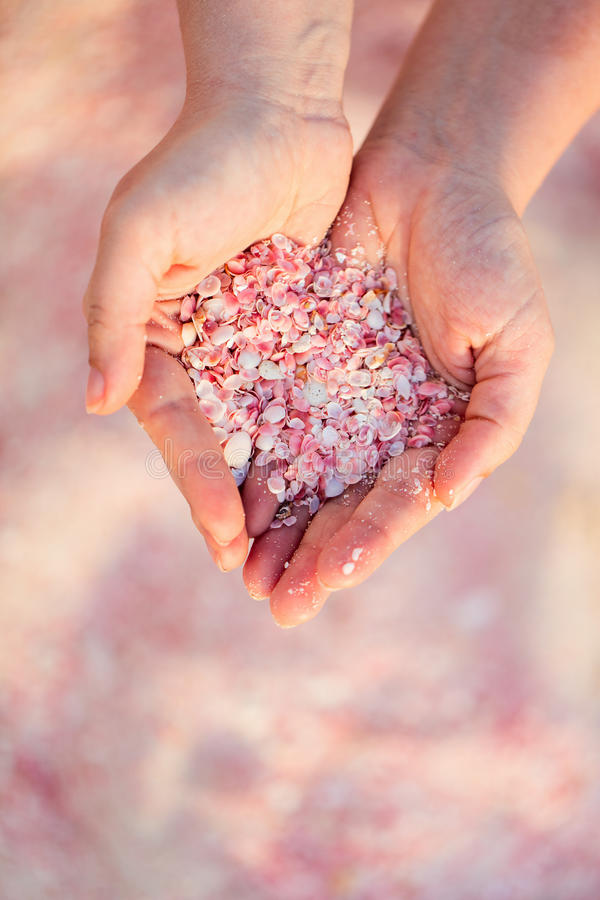 Girl holding pink shells stock image