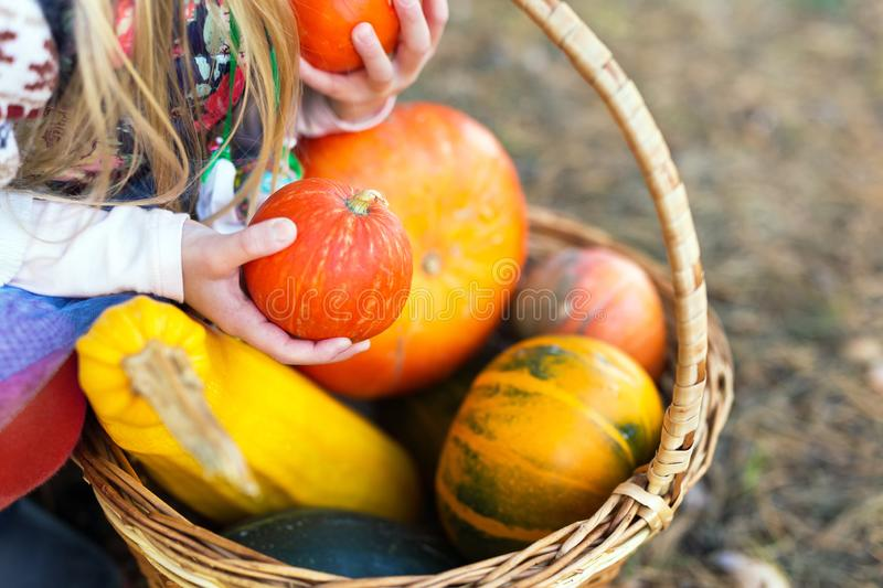 Girl holding a pumpkins in hands outdoors stock images