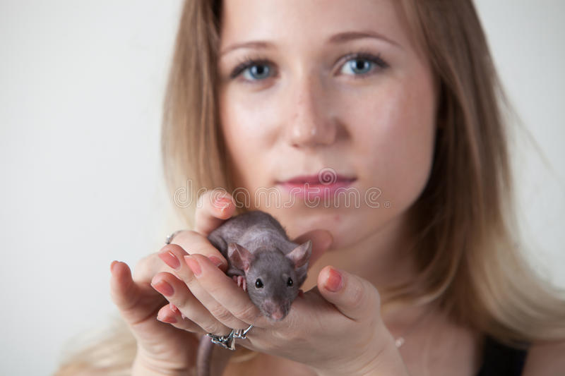 The girl is holding a rat in her hands. The rat looks at the camera royalty free stock images