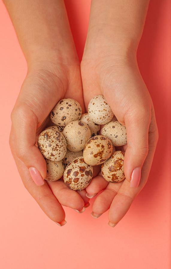 The girl holds in hands a lot of quail eggs. Close up on a pink background with place for text.  royalty free stock image