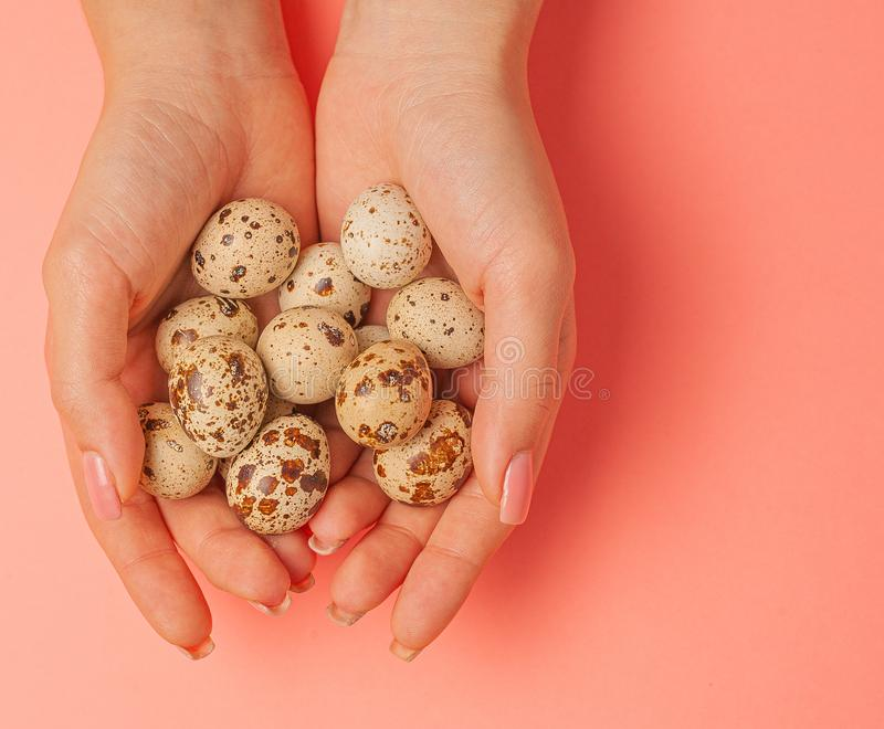 The girl holds in hands a lot of quail eggs. Close up on a pink background with place for text.  stock photo