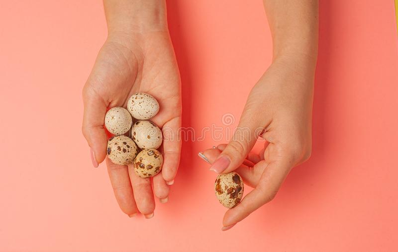 The girl holds in hands a lot of quail eggs. Close up on a pink background with place for text.  stock image