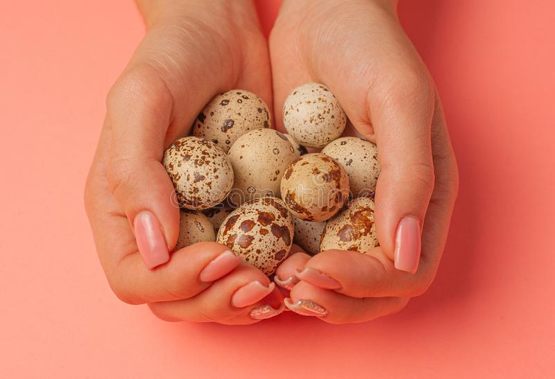 The girl holds in hands a lot of quail eggs. Close up on a pink background with place for text.  royalty free stock photos