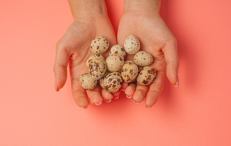 The girl holds in hands a lot of quail eggs. Close up on a pink background with place for text.  stock photos