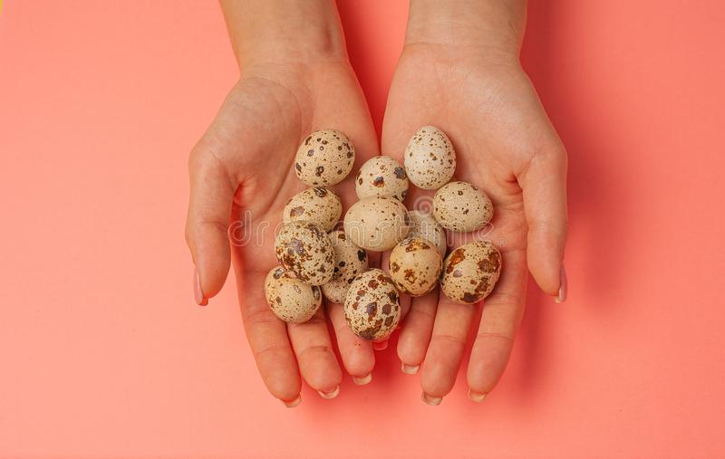 The girl holds in hands a lot of quail eggs. Close up on a pink background with place for text.  royalty free stock photo