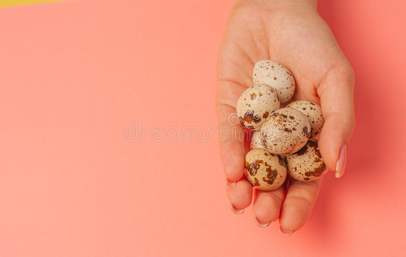The girl holds in hands a lot of quail eggs. Close up on a pink background with place for text.  stock photography