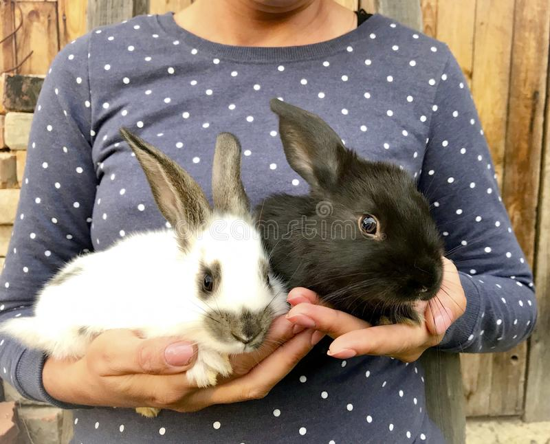 The girl holds the hands of rabbits. One is white, the other is black. Household in the village.  stock images