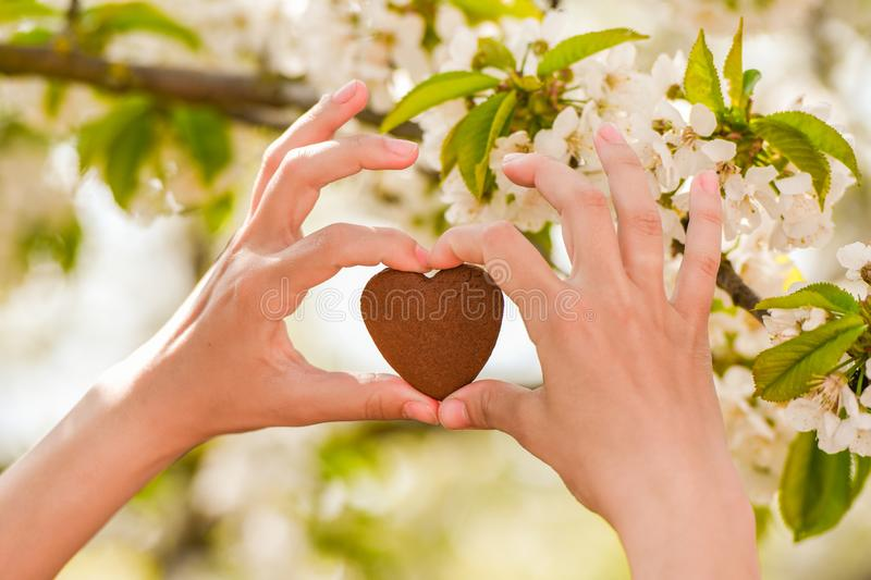 The girl holds the heart in his hands. heart in hand. Concept of healthy, love, organ, donor, hope and cardiology donation. royalty free stock photography