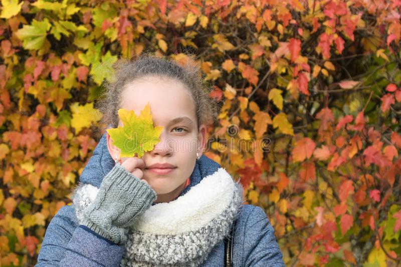 Girl holds in her hand a maple leaf standing on the background of autumn leaves royalty free stock images