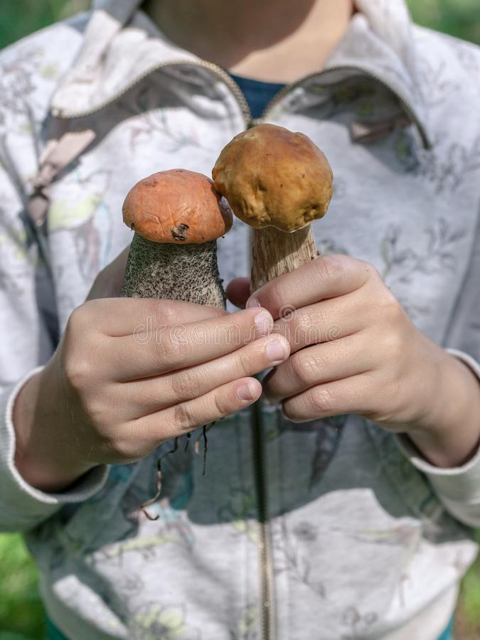 The girl holds red and white mushrooms in her hands. Autumn concept stock images