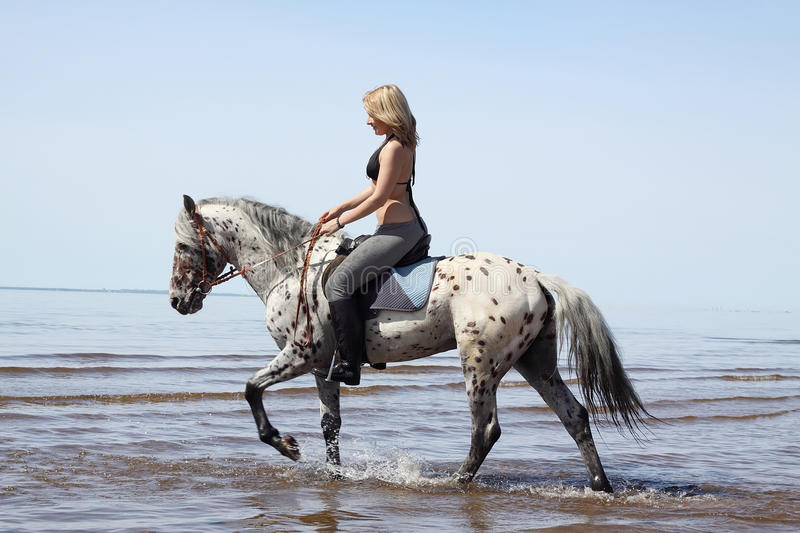 Girl and horse on beach stock photography