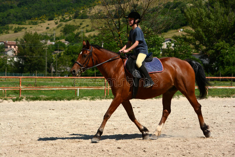 Download Girl horse riding stock photo. Image of lesson, horizontal - 32479258