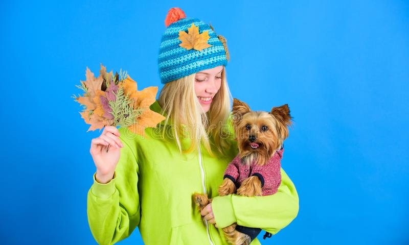 Girl hug cute dog and hold fallen leaves. Woman carry yorkshire terrier. Take care pet autumn. Veterinary medicine. Concept. Health care for dog pet. regular stock photography