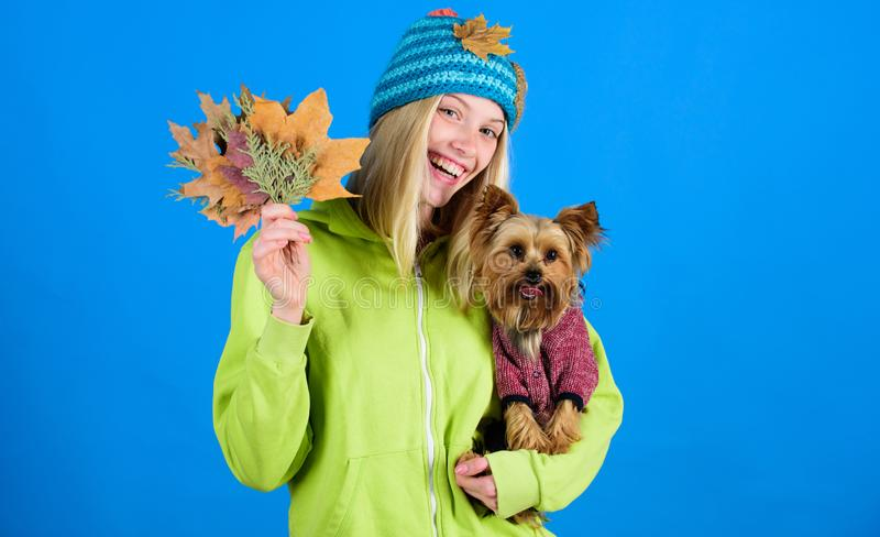 Girl hug cute dog and hold fallen leaves. Woman carry yorkshire terrier. Take care pet autumn. Veterinary medicine. Concept. Health care for dog pet. Pet health royalty free stock photo