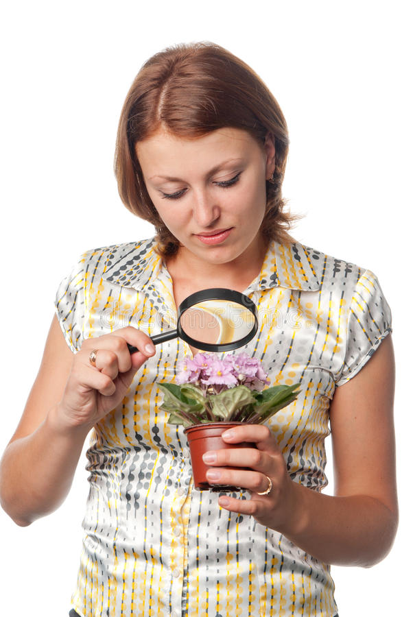 Download Girl inspects violets stock image. Image of examine, loupe - 15213609